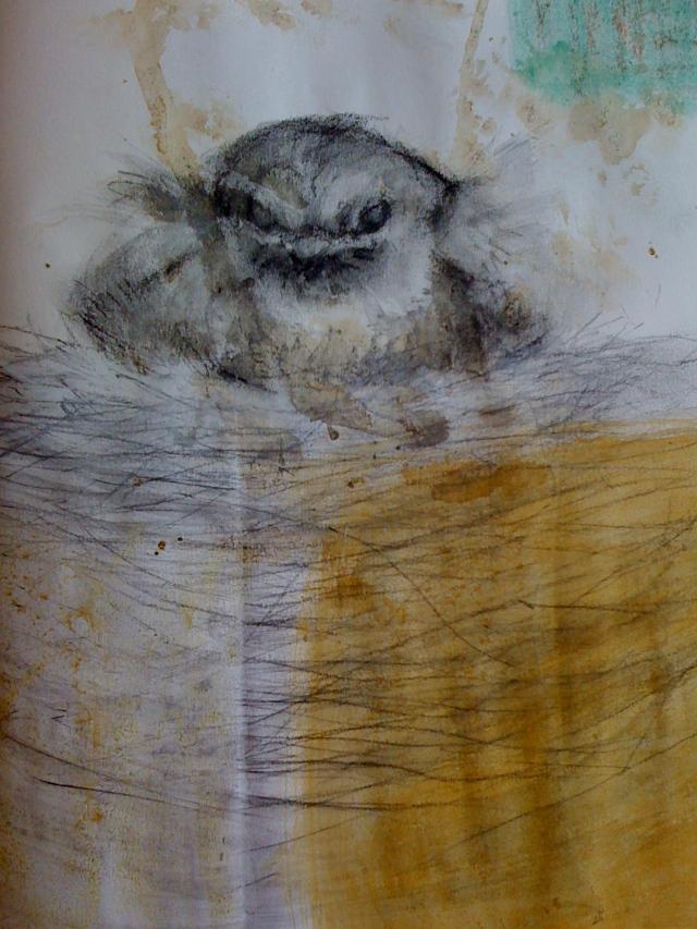 Peewee baby in her nest (sketchbook)
